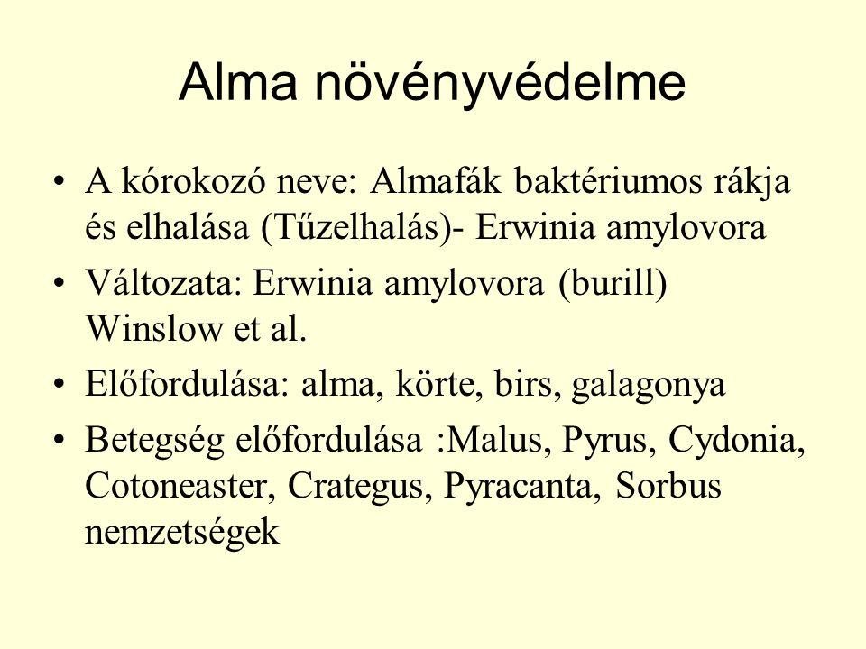 Alma növényvédelme A kórokozó neve: Almafák baktériumos rákja és elhalása (Tűzelhalás)- Erwinia amylovora.