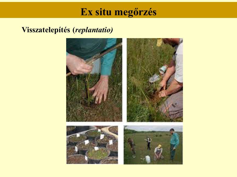 Ex situ megőrzés Visszatelepítés (replantatio)