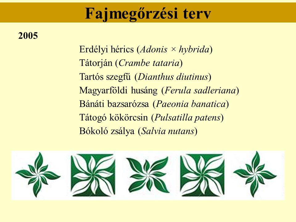 Fajmegőrzési terv 2005 Erdélyi hérics (Adonis × hybrida)