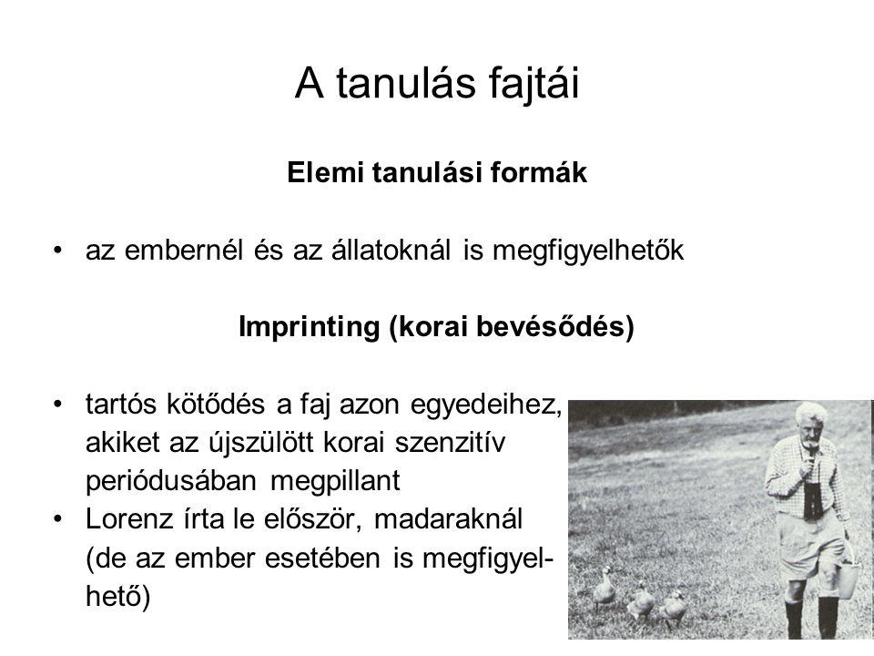 Imprinting (korai bevésődés)