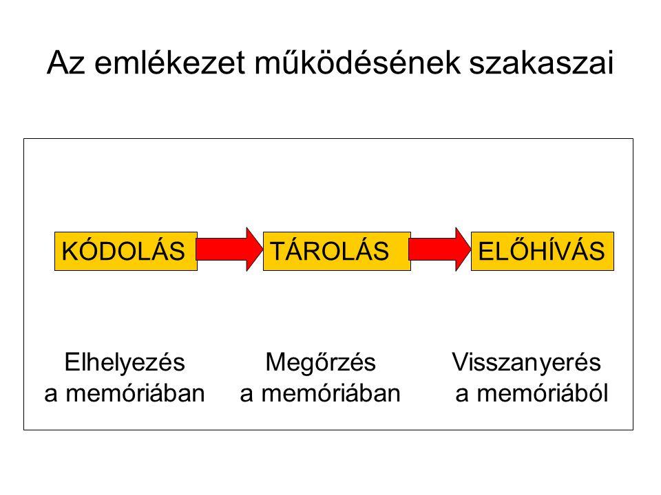 Az emlékezet működésének szakaszai