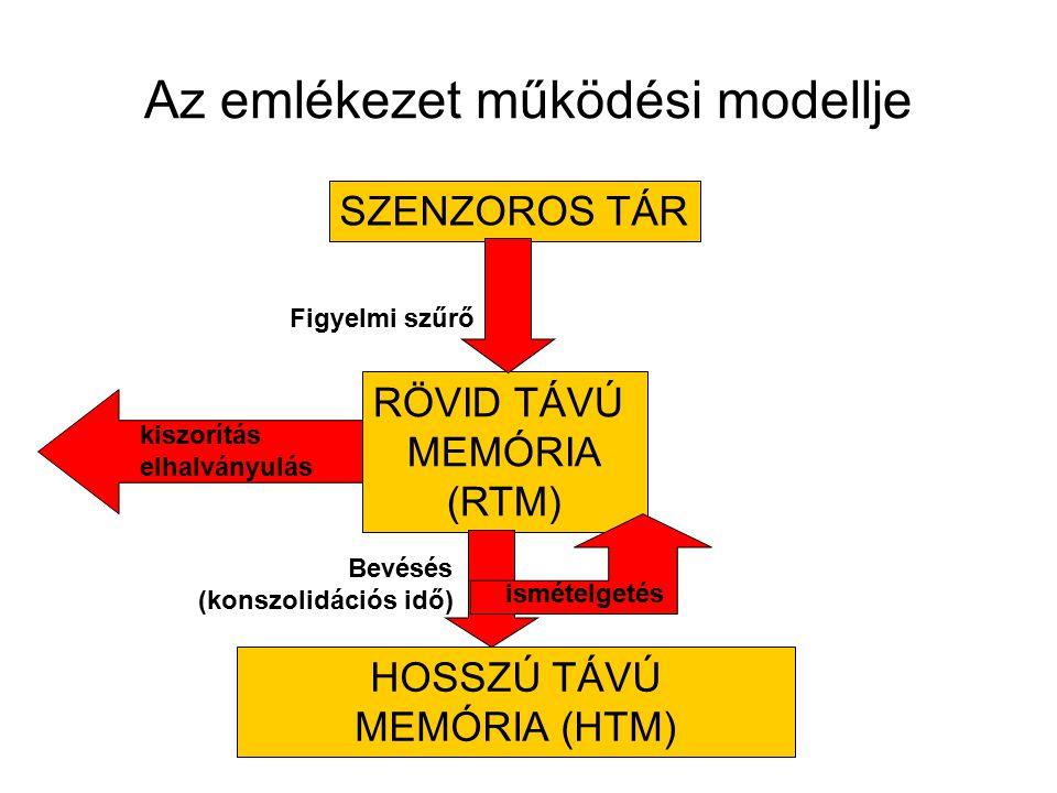 Az emlékezet működési modellje