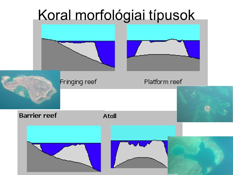 Koral morfológiai típusok