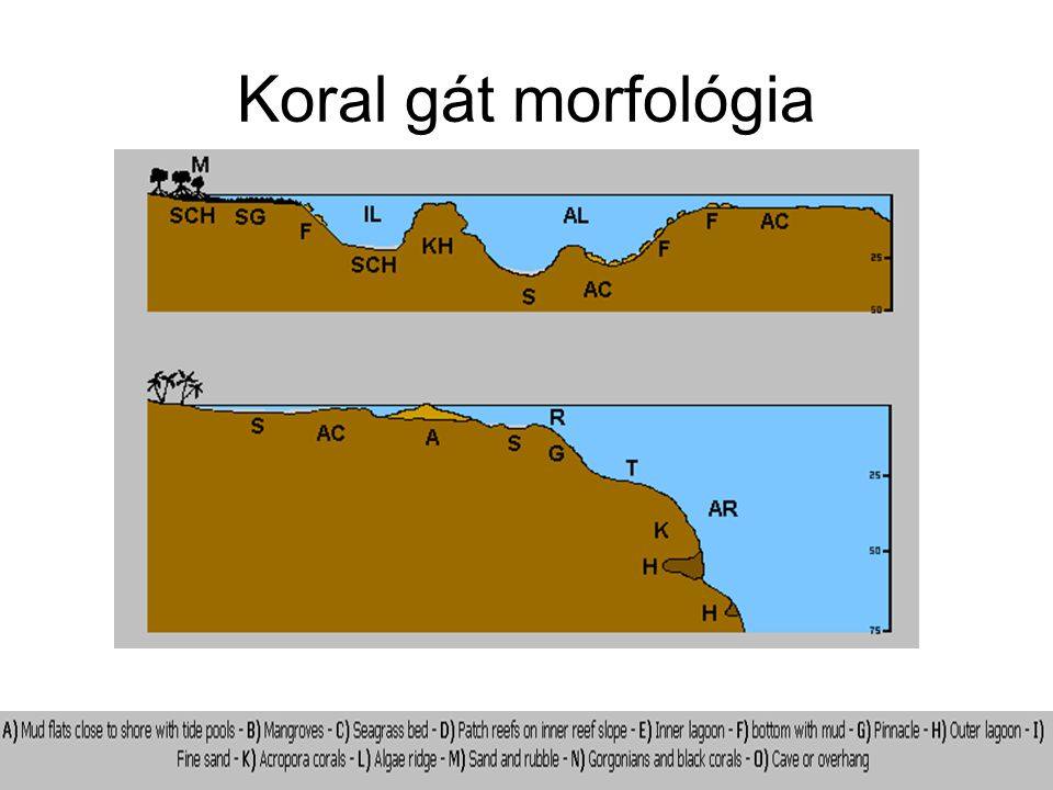 Koral gát morfológia