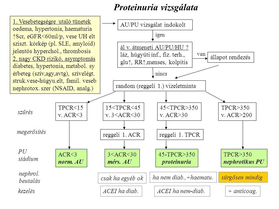 Proteinuria vizsgálata