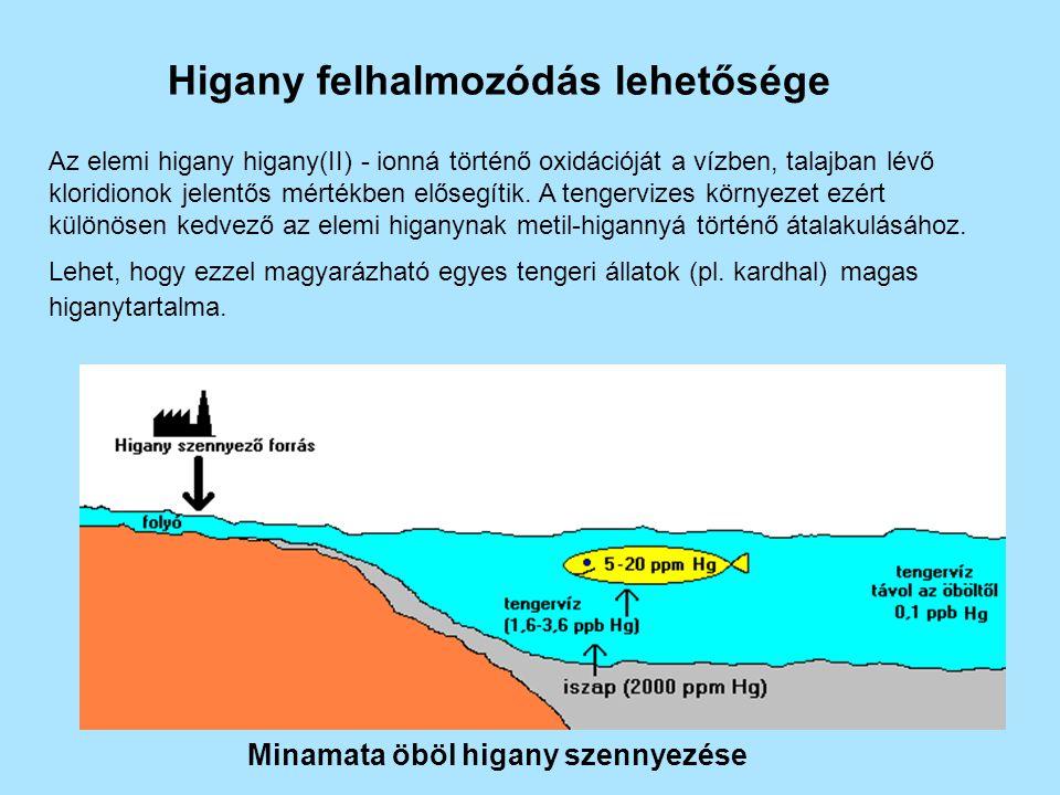 Higany felhalmozódás lehetősége Minamata öböl higany szennyezése