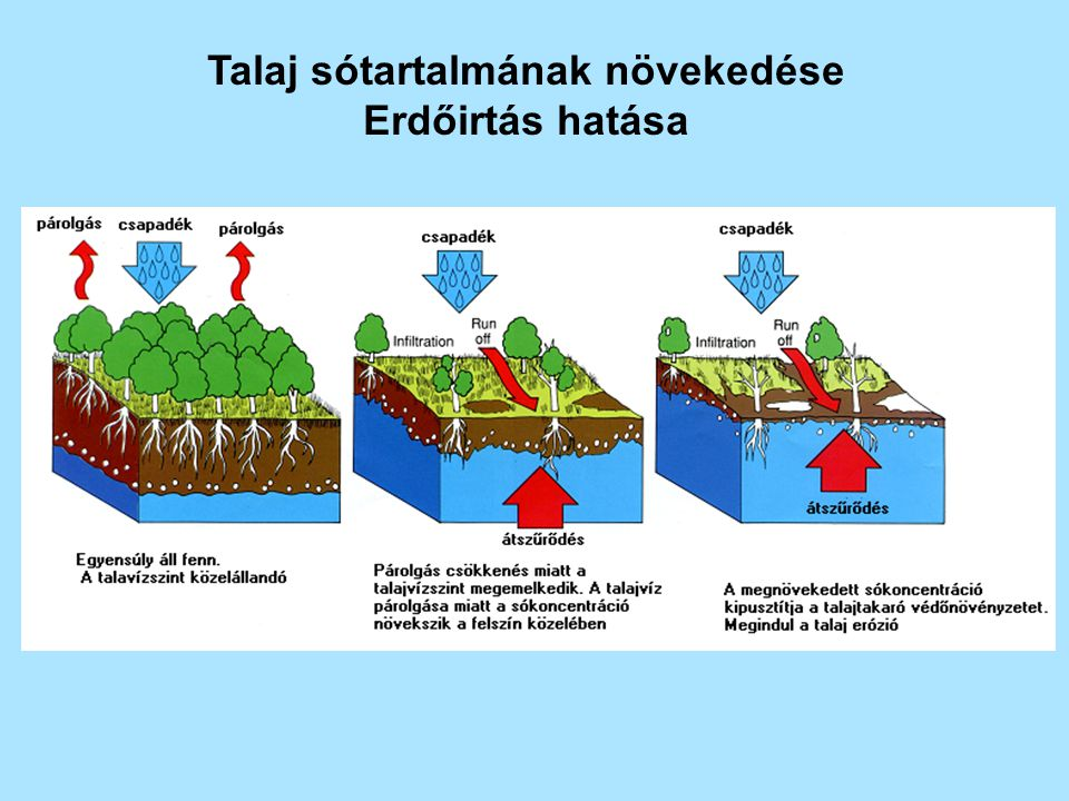 Talaj sótartalmának növekedése
