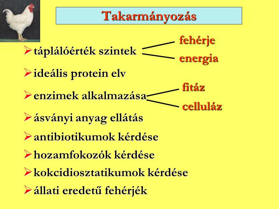 Takarmányozás fehérje energia táplálóérték szintek ideális protein elv