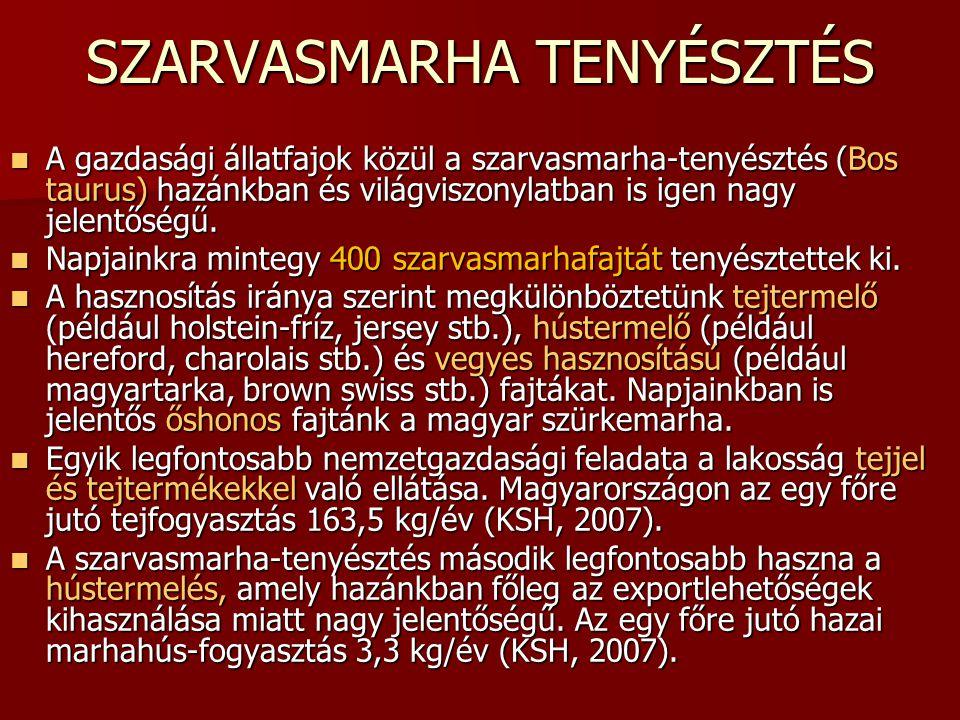 SZARVASMARHA TENYÉSZTÉS