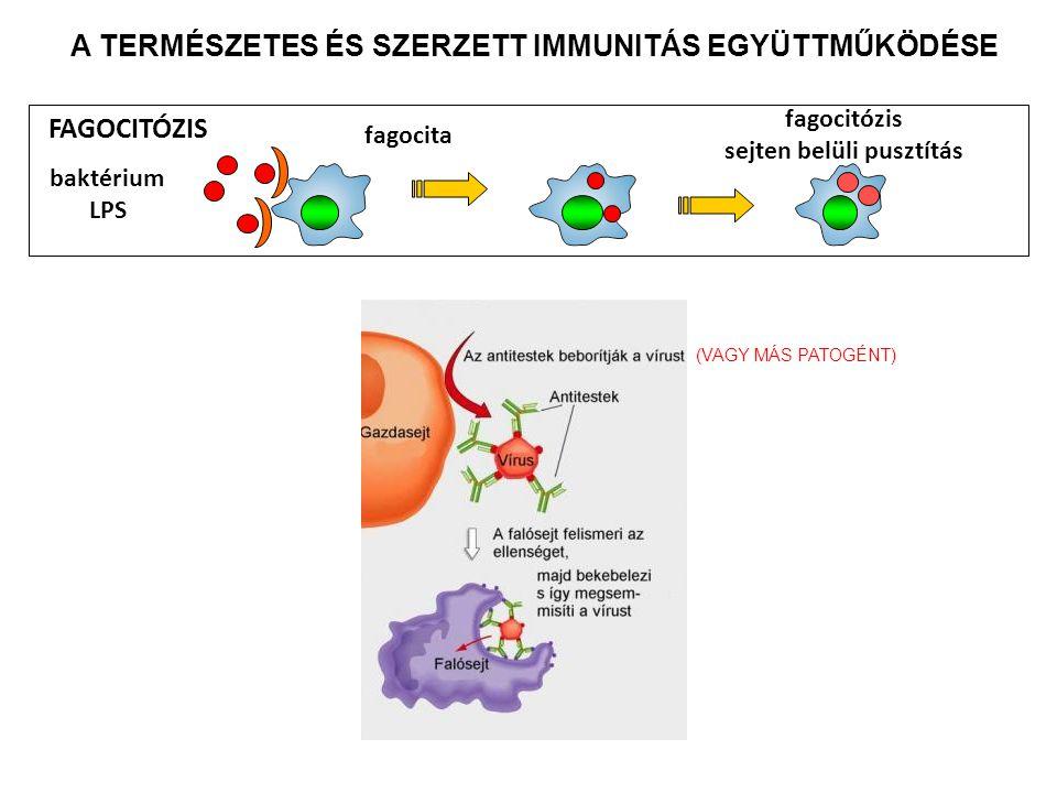 sejten belüli pusztítás