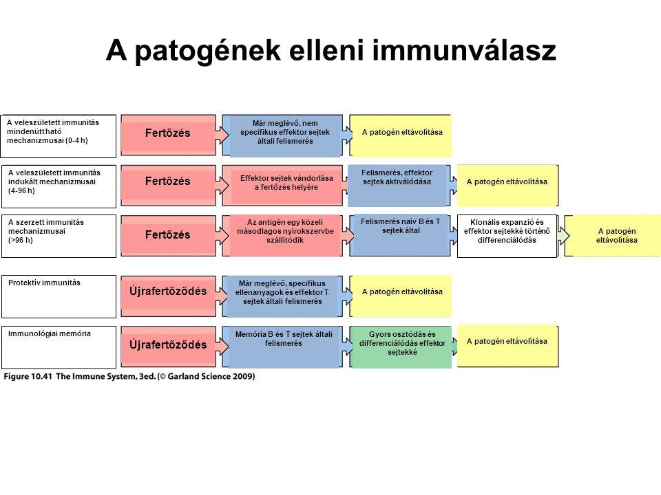A patogének elleni immunválasz