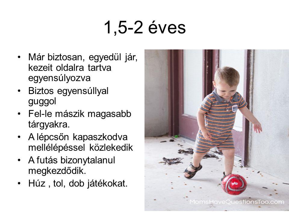 1,5-2 éves Már biztosan, egyedül jár, kezeit oldalra tartva egyensúlyozva. Biztos egyensúllyal guggol.