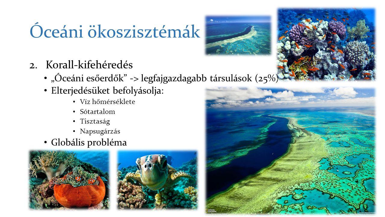 Óceáni ökoszisztémák Korall-kifehéredés
