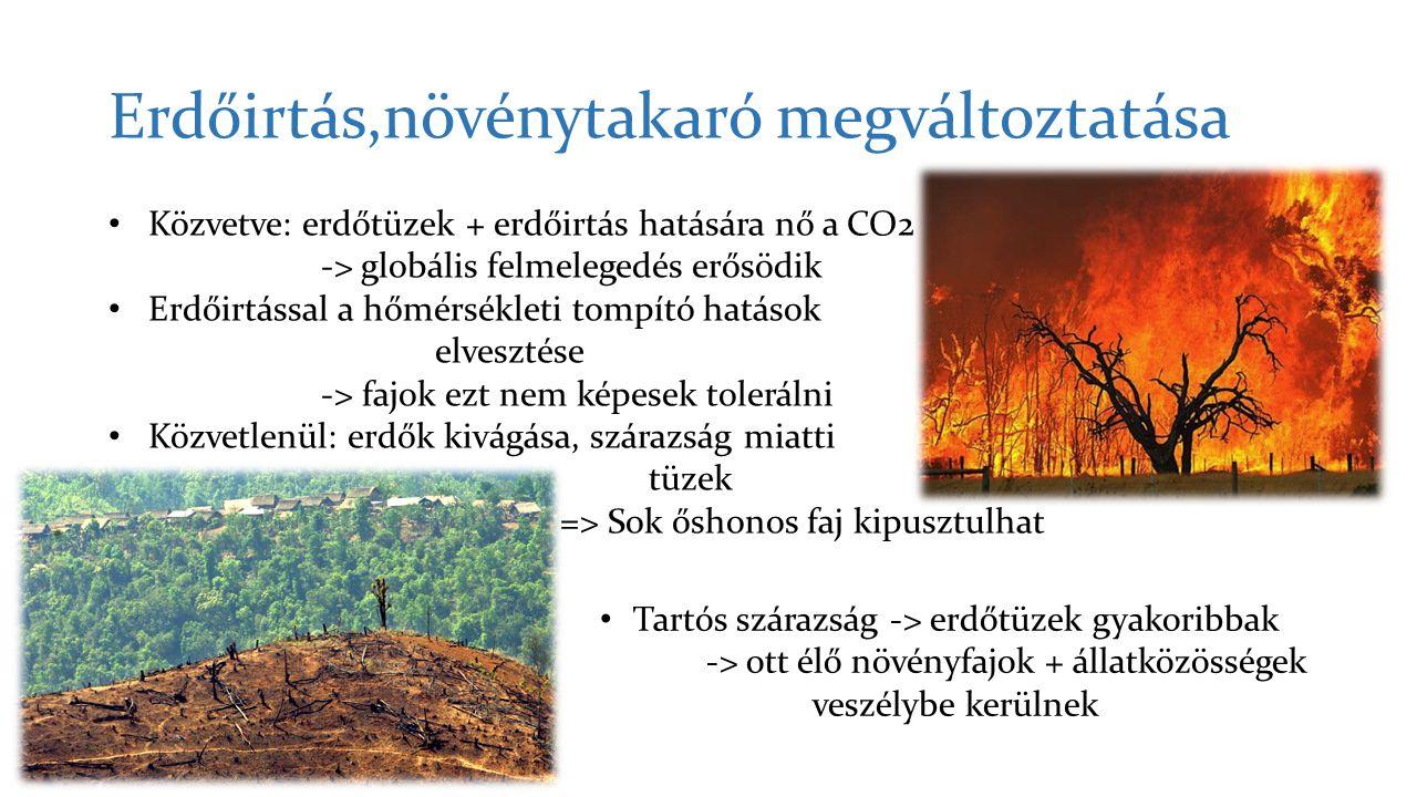 Erdőirtás,növénytakaró megváltoztatása