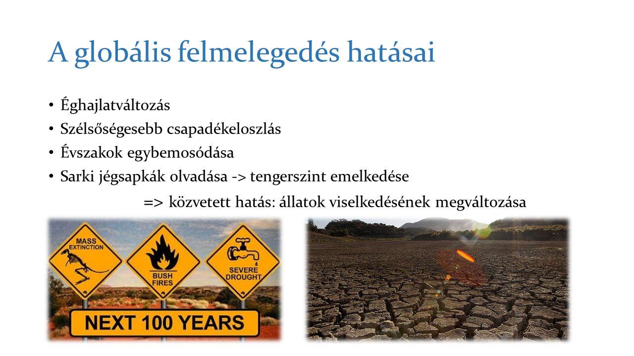 A globális felmelegedés hatásai