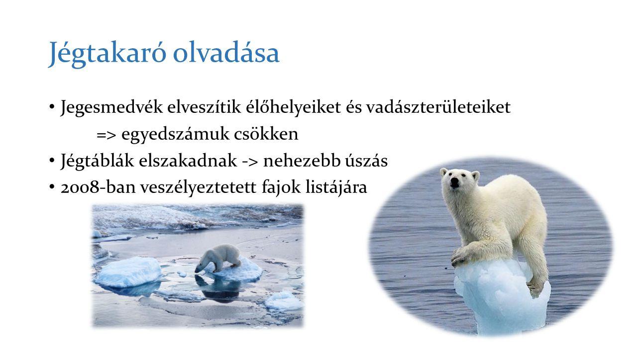 Jégtakaró olvadása Jegesmedvék elveszítik élőhelyeiket és vadászterületeiket. => egyedszámuk csökken.