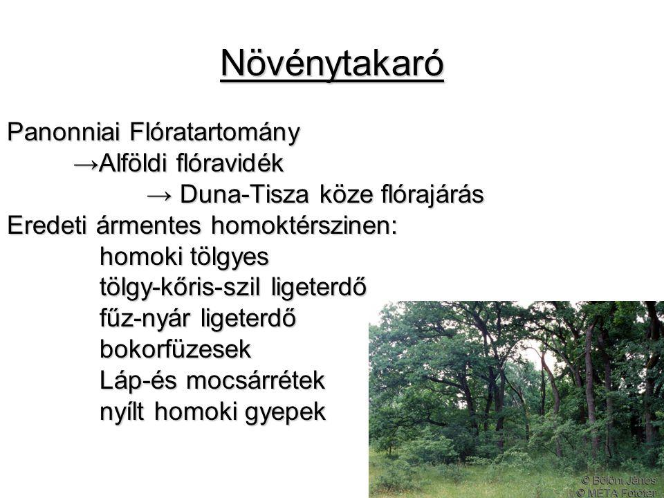 Növénytakaró Panonniai Flóratartomány →Alföldi flóravidék