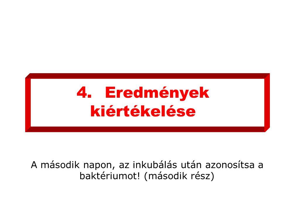 4. Eredmények kiértékelése
