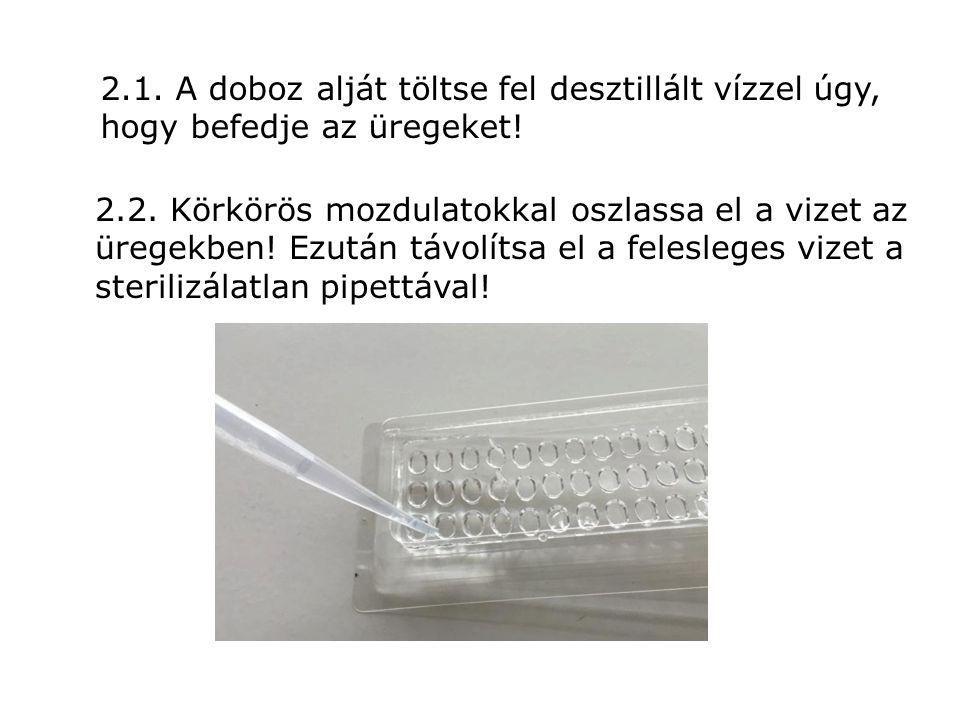 2.1. A doboz alját töltse fel desztillált vízzel úgy, hogy befedje az üregeket!