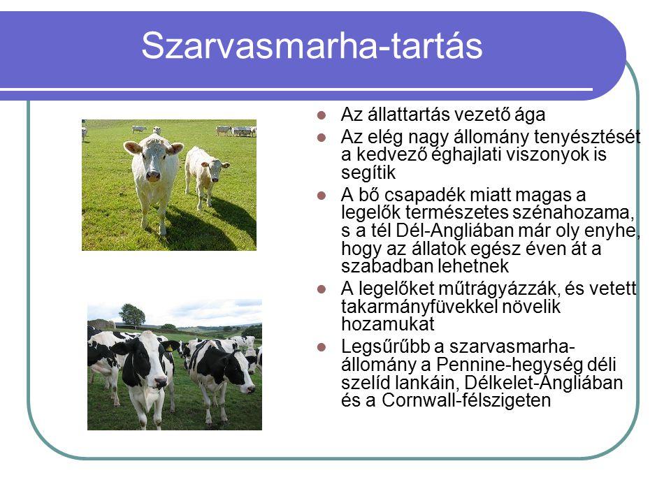 Szarvasmarha-tartás Az állattartás vezető ága