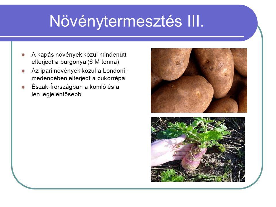 Növénytermesztés III. A kapás növények közül mindenütt elterjedt a burgonya (6 M tonna)