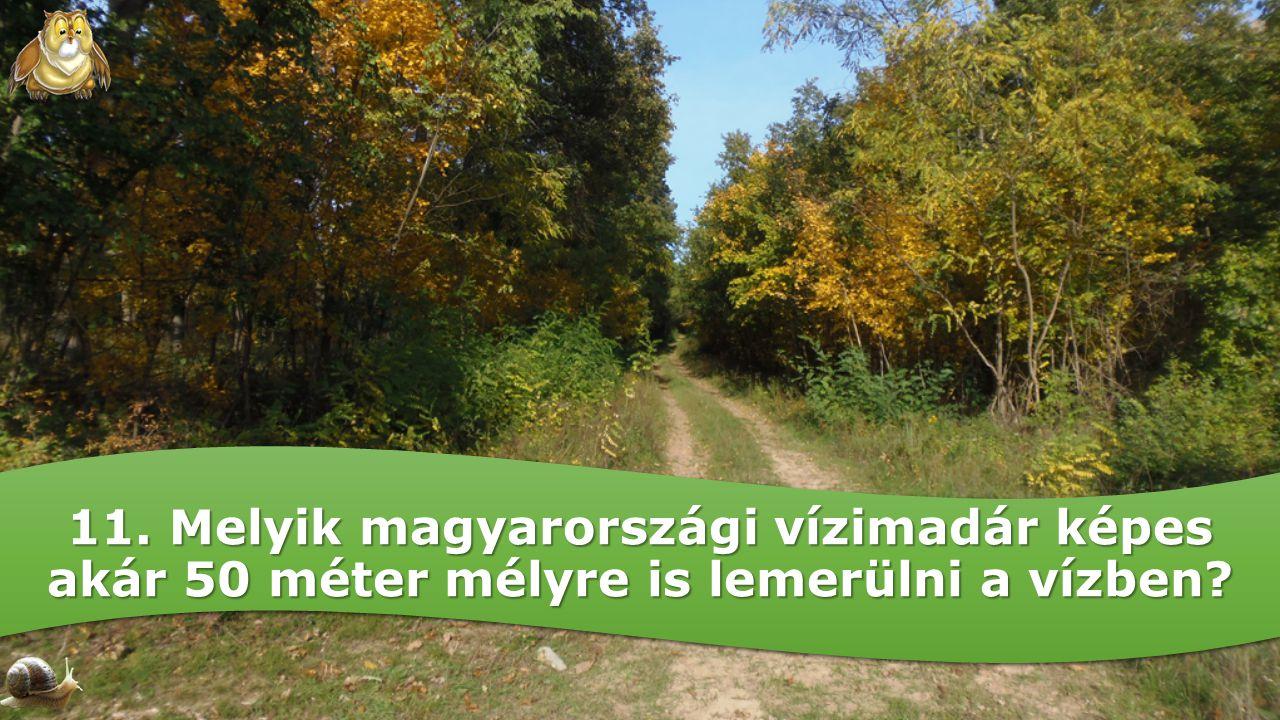 11. Melyik magyarországi vízimadár képes akár 50 méter mélyre is lemerülni a vízben