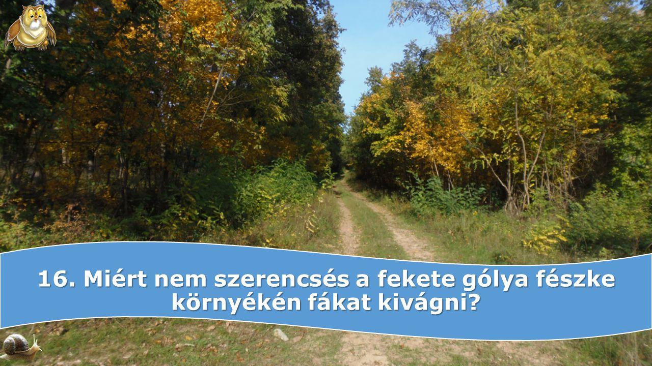 16. Miért nem szerencsés a fekete gólya fészke környékén fákat kivágni