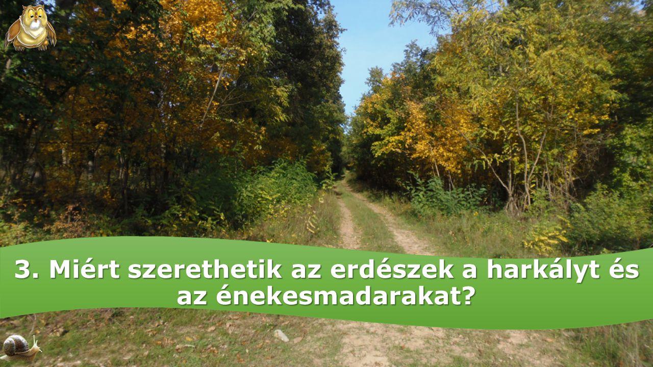 3. Miért szerethetik az erdészek a harkályt és az énekesmadarakat
