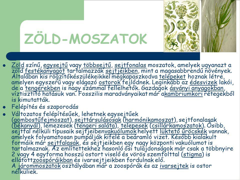ZÖLD-MOSZATOK