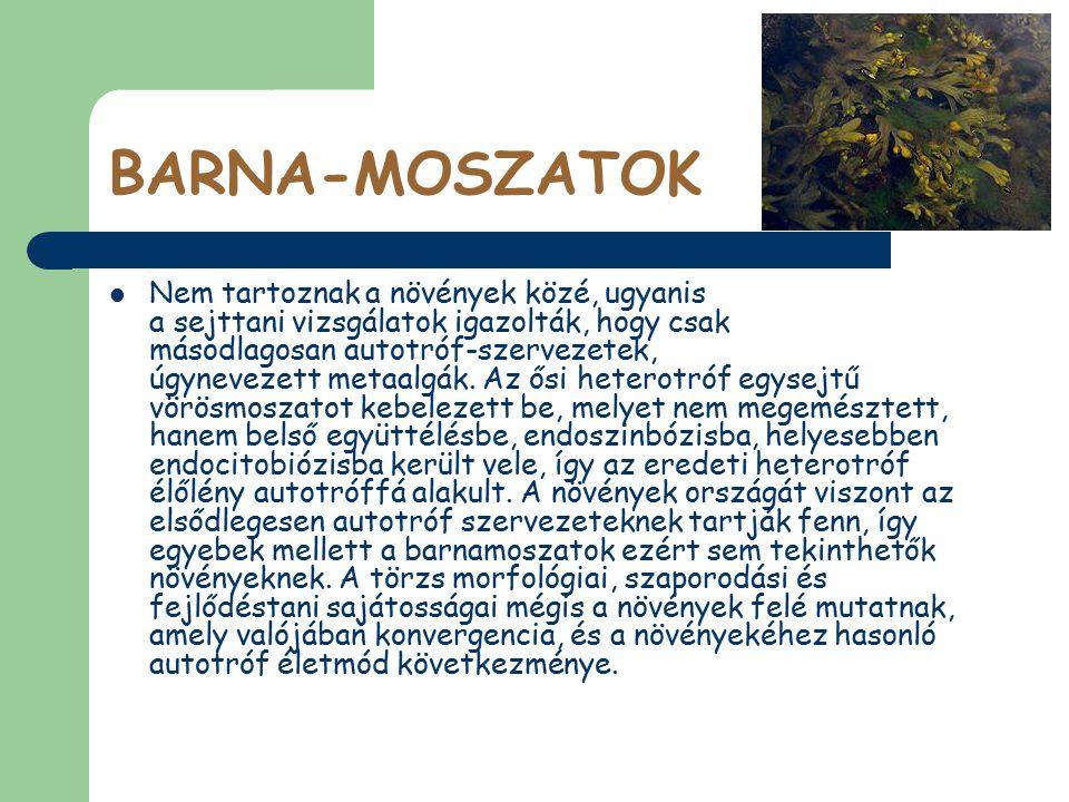 BARNA-MOSZATOK