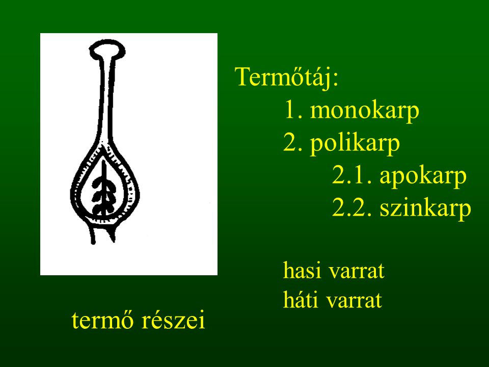 Termőtáj: 1. monokarp 2. polikarp 2.1. apokarp 2.2. szinkarp