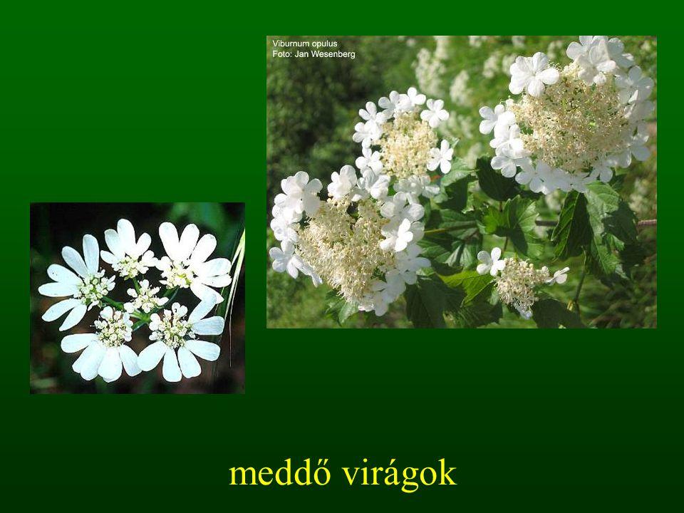 meddő virágok