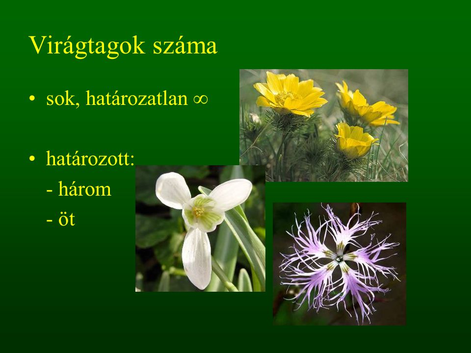 Virágtagok száma sok, határozatlan ∞ határozott: - három - öt