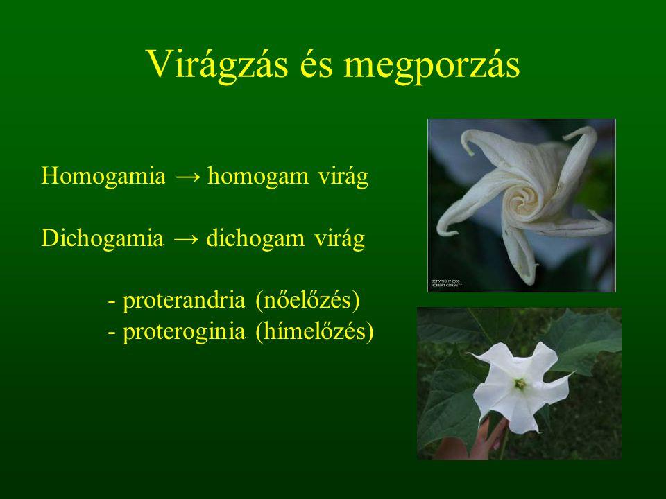 Virágzás és megporzás Homogamia → homogam virág