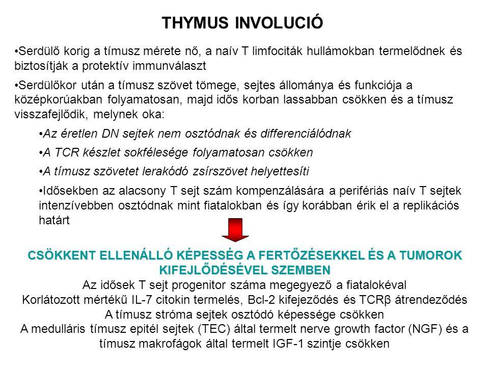 THYMUS INVOLUCIÓ Serdülő korig a tímusz mérete nő, a naív T limfociták hullámokban termelődnek és biztosítják a protektív immunválaszt.