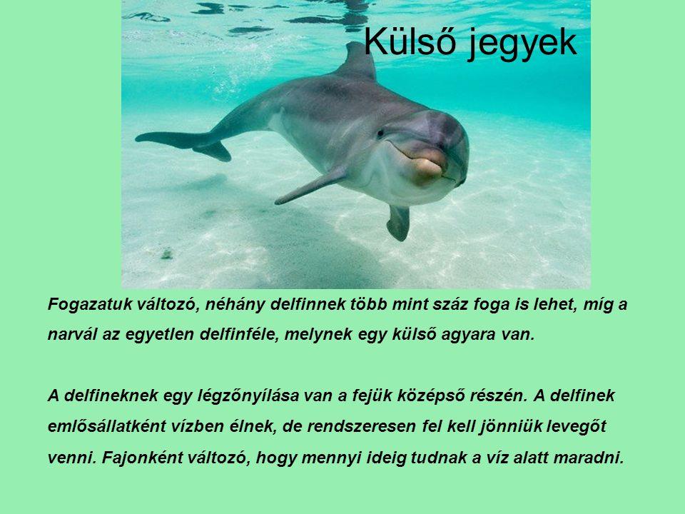 Külső jegyek Fogazatuk változó, néhány delfinnek több mint száz foga is lehet, míg a narvál az egyetlen delfinféle, melynek egy külső agyara van.
