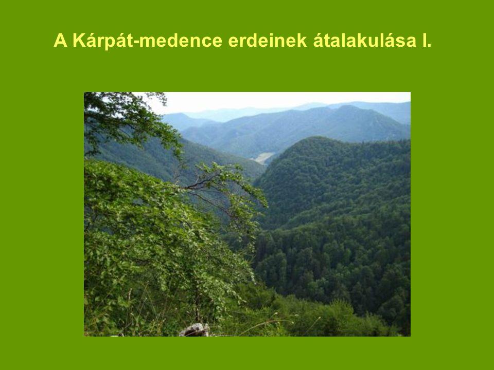 A Kárpát-medence erdeinek átalakulása I.