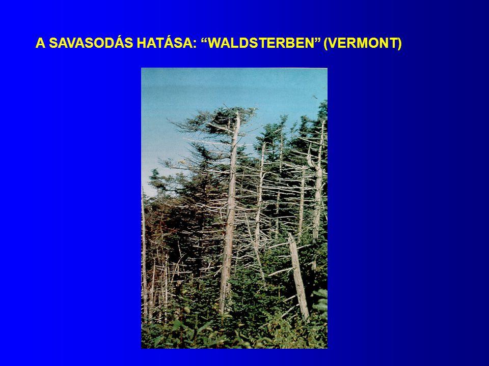 A SAVASODÁS HATÁSA: WALDSTERBEN (VERMONT)