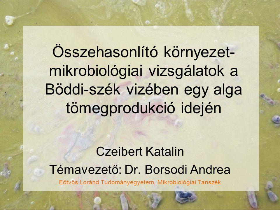 Összehasonlító környezet- mikrobiológiai vizsgálatok a Böddi-szék vizében egy alga tömegprodukció idején