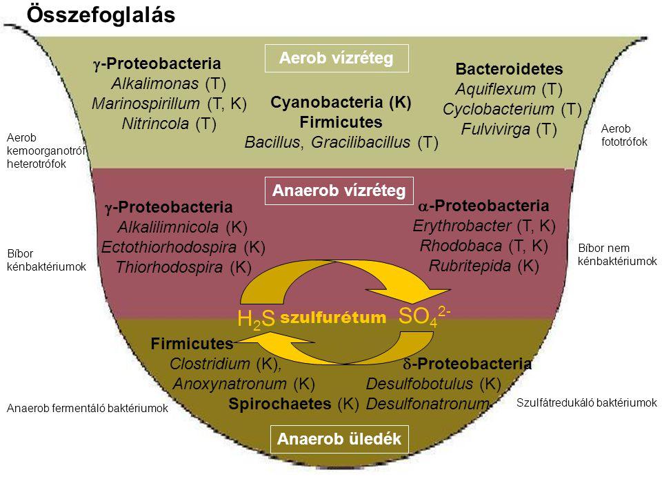 Összefoglalás SO42- H2S Aerob vízréteg -Proteobacteria