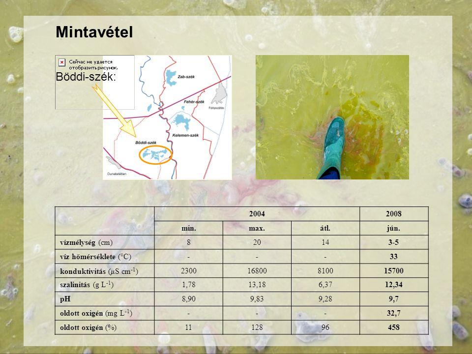 Mintavétel Böddi-szék: 2004 2008 min. max. átl. jún. vízmélység (cm) 8