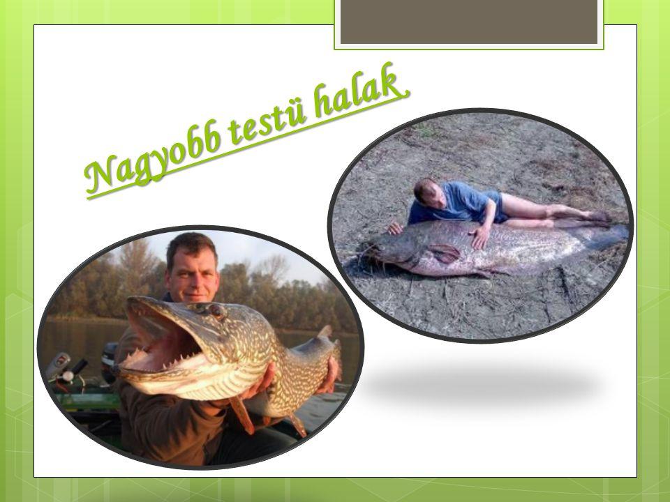 Nagyobb testü halak