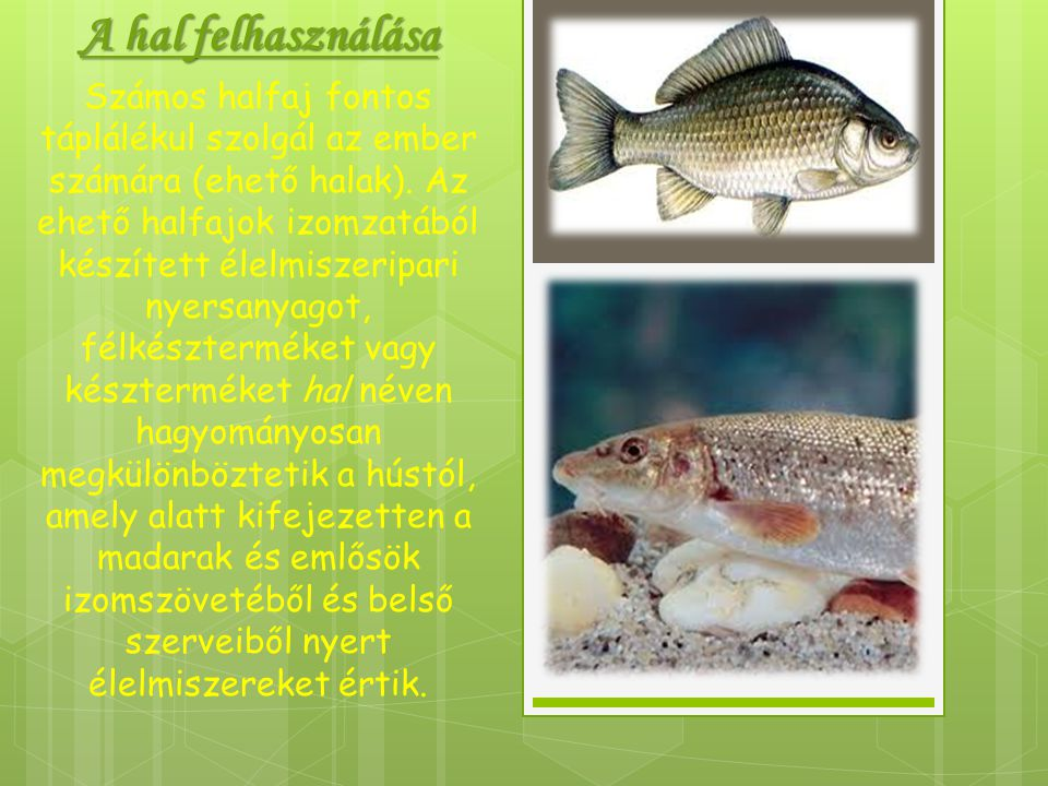 A hal felhasználása