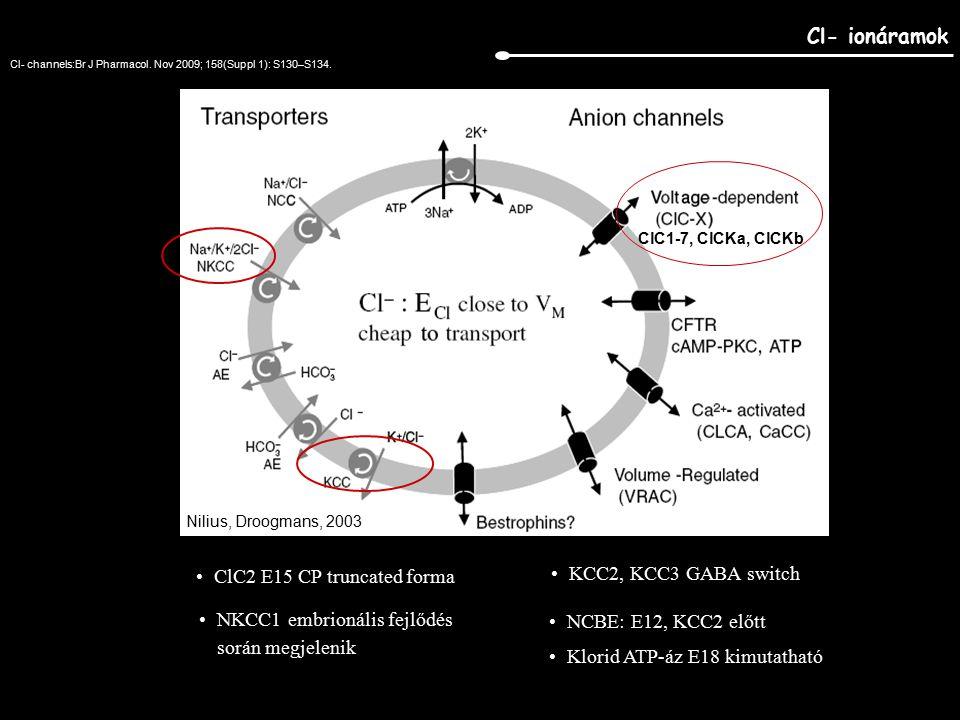 Cl- ionáramok ClC2 E15 CP truncated forma