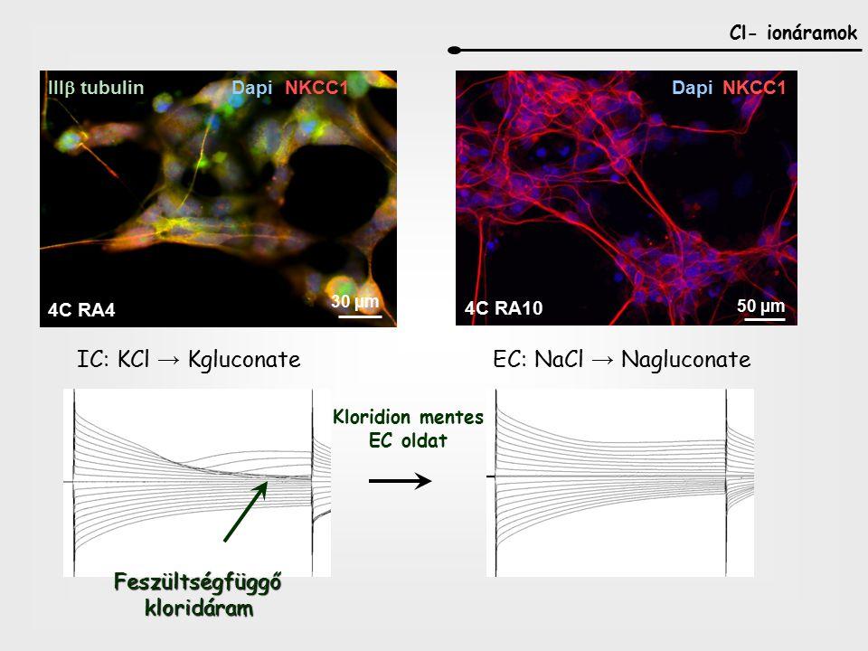 IC: KCl → Kgluconate EC: NaCl → Nagluconate Feszültségfüggő kloridáram