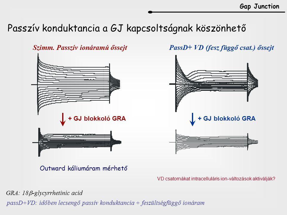 Passzív konduktancia a GJ kapcsoltságnak köszönhető
