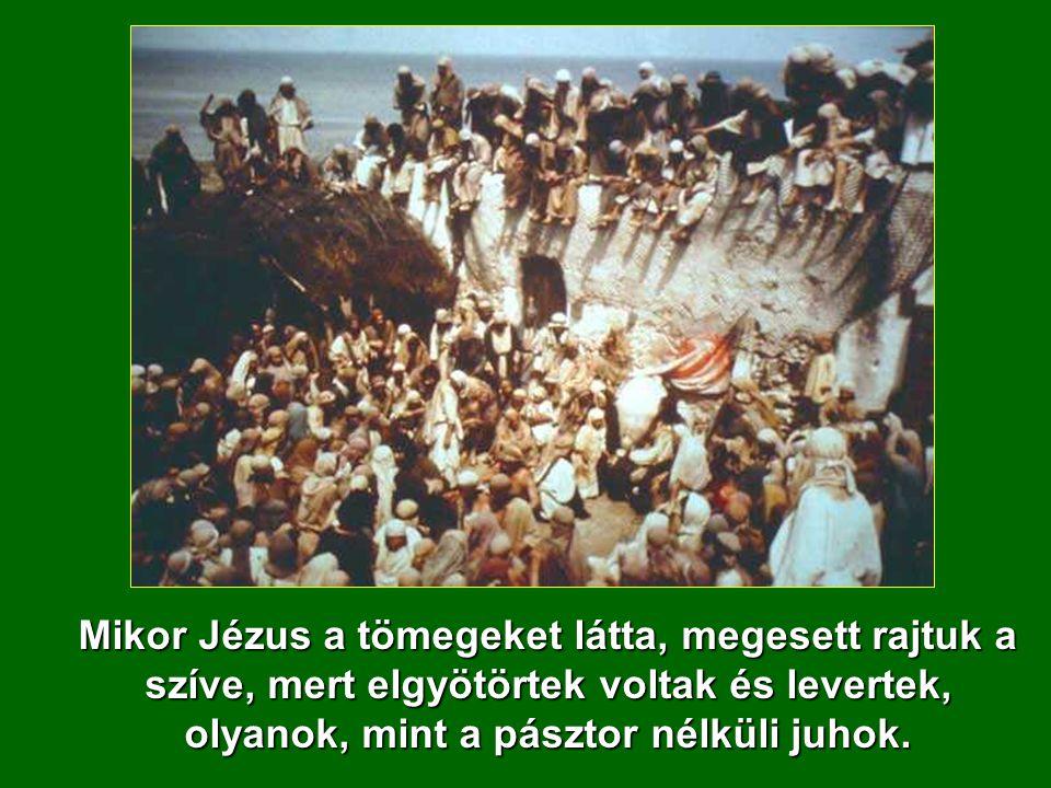 Mikor Jézus a tömegeket látta, megesett rajtuk a szíve, mert elgyötörtek voltak és levertek, olyanok, mint a pásztor nélküli juhok.