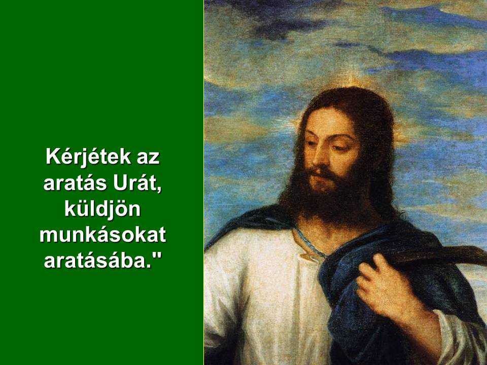 Kérjétek az aratás Urát, küldjön munkásokat aratásába.