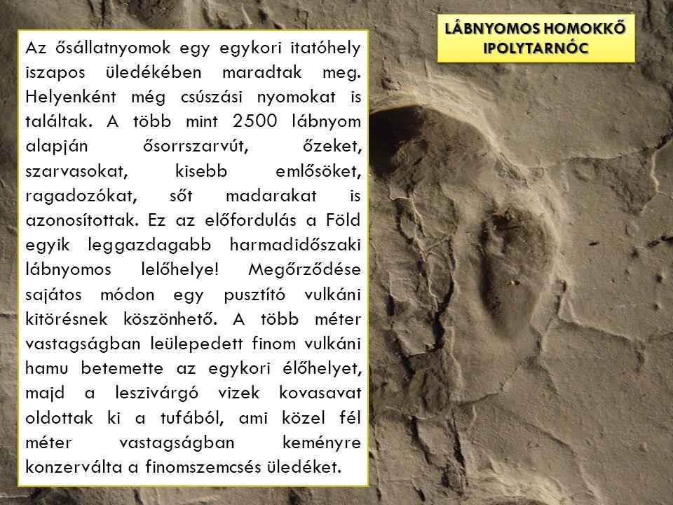 lábnyomos homokkő IPOLYTARNÓC.