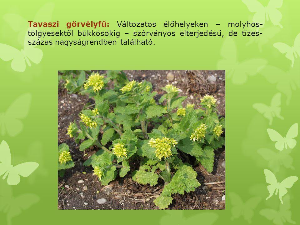 Tavaszi görvélyfű: Változatos élőhelyeken – molyhos-tölgyesektől bükkösökig – szórványos elterjedésű, de tízes-százas nagyságrendben található.